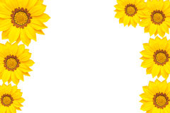Yellow flowers isolated on white background royalty free stock photos