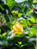 Yellow flowers in the jungle. Nature and flowers royalty free stock photos