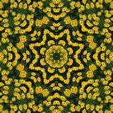 Yellow flowers kaleidoscope. 8 elements yellow flowers kaleidoscope Stock Photography