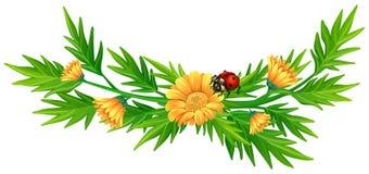 Yellow flowers and ladybug Stock Photos