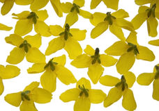 Yellow flowers on the light box Royalty Free Stock Photo