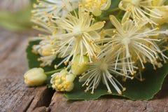 Yellow flowers of linden macro. Horizontal Stock Photography