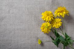 Yellow flowers on linen background Royalty Free Stock Image