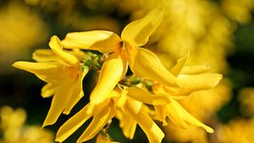 Yellow Flowers on Macro Shot royalty free stock images