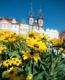 Yellow flowers on the main square in Prague Stock Photos