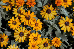 Yellow of flowers Stock Photography