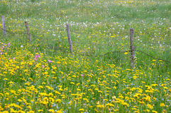 Yellow flowers in meadow Stock Photos