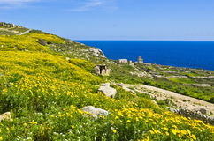 Yellow flowers meadows. Yellow flowers and meadows during Spring, countryside on the island of Malta Stock Photography