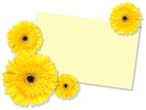 Yellow flowers with message-card Stock Photography
