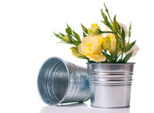 Yellow flowers in metal plant pot Stock Images
