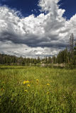 Yellow Flowers in the Mountain Meadow. Yellow flowers in a meadow that leads up to a mountain lake called Butterfly lake with thunderstorms in the Unitas Royalty Free Stock Photos