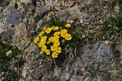 Yellow flowers on a mountain path stock photos