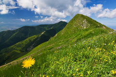 Yellow flowers on mountain-ridge Royalty Free Stock Photo