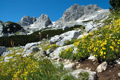 Yellow flowers in the mountains stock image