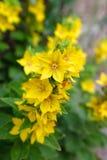 Yellow flowers Stock Photos