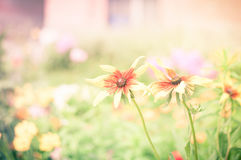 Yellow flowers, natural summer background, blurred image, select Stock Photos