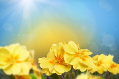 Yellow flowers on a nature background Royalty Free Stock Photos