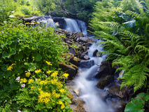 Yellow flowers near a mountain stream Royalty Free Stock Image