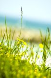 Yellow flowers near sea.  Stock Photos