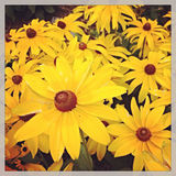 Yellow Flowers in New York City Royalty Free Stock Image