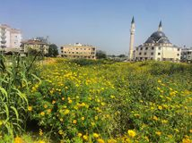 Yellow flowers and mosque royalty free stock photos