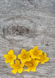Yellow flowers on the old wood Royalty Free Stock Image