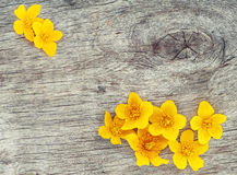 Yellow flowers on the old wood Royalty Free Stock Photography