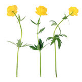 Yellow Flowers On The White Background Stock Photography