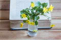 Yellow flowers and open book. flowers and book stock photos