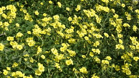 Yellow flowers. On open spaces of Andalusia Stock Photo