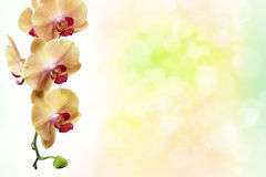Yellow flowers orchids isolated on white Stock Images