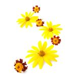 Yellow flowers ornament isolated on white background Royalty Free Stock Image