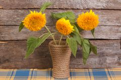 Yellow flowers of ornamental sunflowers in a vase Stock Photo