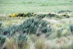 Flowers surrounded by thick grass in the Antisana Ecological Reserve Royalty Free Stock Photo
