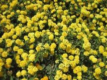 Yellow flowers pattern Stock Photo
