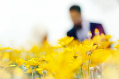 Yellow flowers. People standing among the flowers Royalty Free Stock Photo