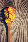 Yellow flowers and petals of a calendula in a wooden spoon on a textural wooden surface. Royalty Free Stock Photography