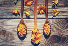 Yellow flowers and petals of a calendula in a wooden spoons on a textural wooden surface. Medicinal flowers of a marigold Stock Photo
