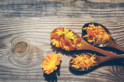 Yellow flowers and petals of a calendula in a wooden spoons on a textural wooden surface. Medicinal flowers of a marigold Stock Photos