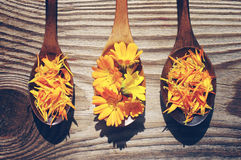 Yellow flowers and petals of a calendula in a wooden spoons on a textural wooden surface. Medicinal flowers of a marigold Stock Image