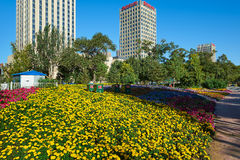 The yellow flowers Stock Photos