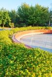 The yellow flowers Stock Photo