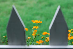 Yellow Flowers and Picket Fence. Yellow wildflowers behind a picket fence Royalty Free Stock Photography