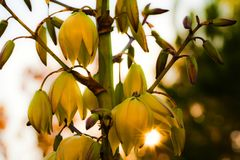 Yellow Flowers Plant in Nature Royalty Free Stock Photo