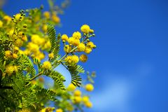 Yellow Flowers Plant in Nature Royalty Free Stock Image