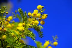 Yellow Flowers Plant in Nature Stock Photos