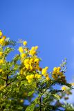 Yellow Flowers Plant in Nature Stock Photography