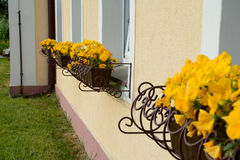 Yellow flowers in plant pots at windows Royalty Free Stock Photos