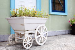 Yellow Flowers Planting In A White Wooden Cart Royalty Free Stock Photography