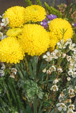 Yellow flowers. Stock Images